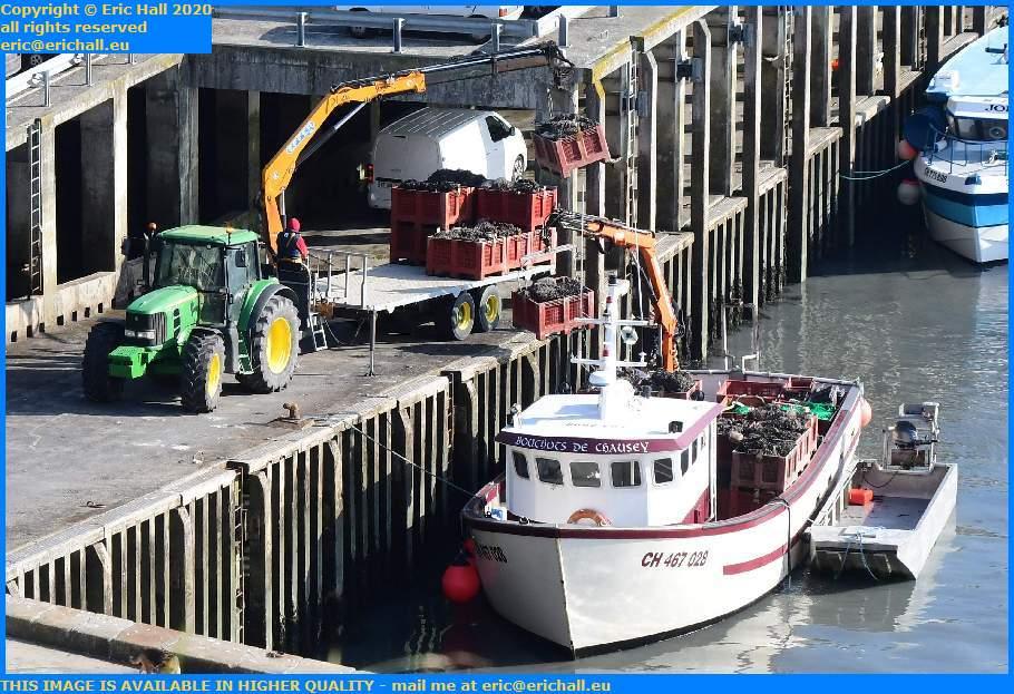 Unloading Bouchots De Chausey Port de Granville Harbour Manche Normandy France Eric Hall