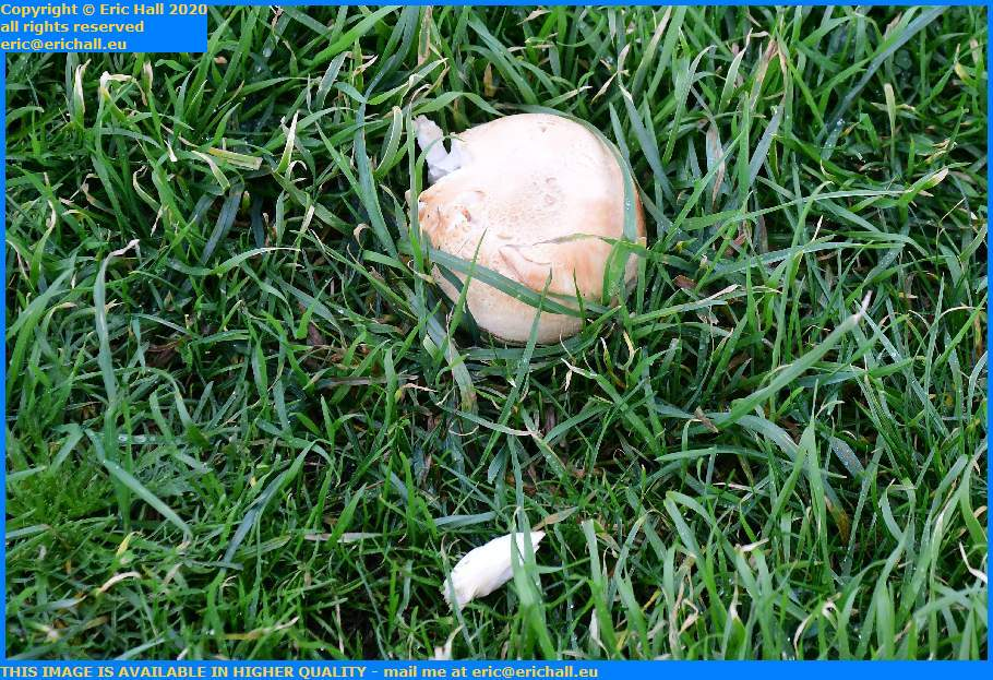 mushroom pointe du roc Granville Manche Normandy France Eric Hall