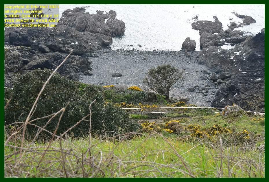 gorse bushes pointe du roc Granville Manche Normandy France Eric Hall
