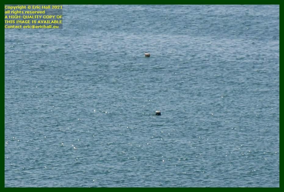 buoys pointe du roc Granville Manche Normandy France Eric Hall