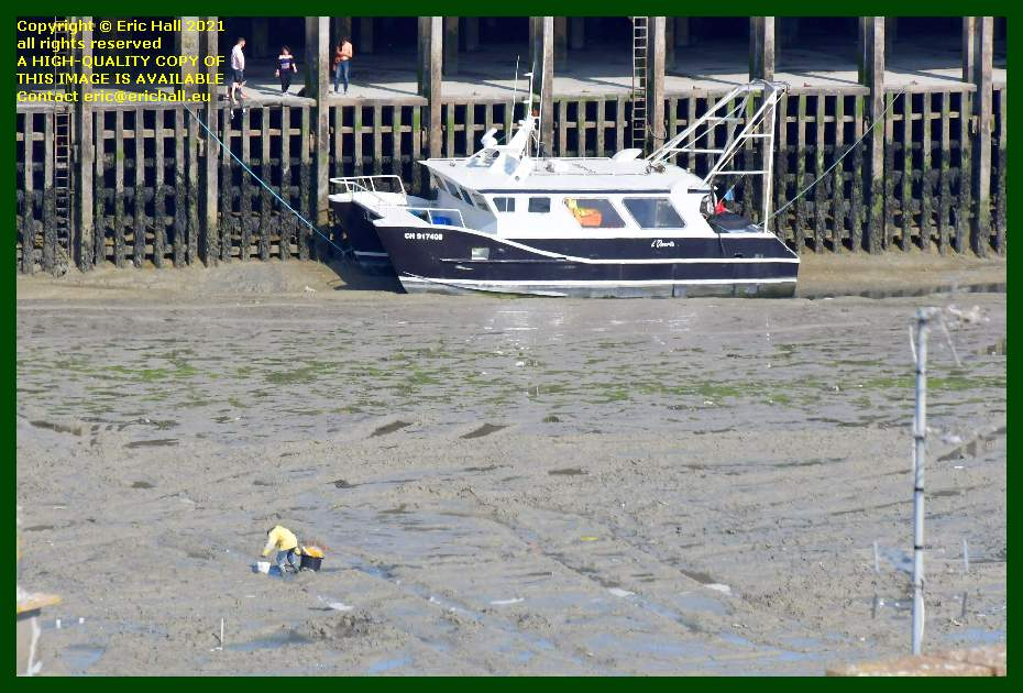 man pegging out on ground fishing boat aground port de Granville harbour Manche Normandy France Eric Hall