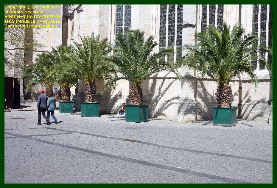 palm trees grote markt leuven belgium Eric Hall
