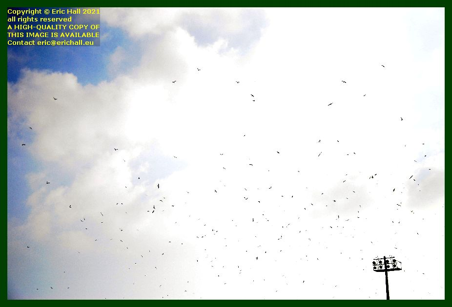 birds flying over stade louis dior Granville Manche Normandy France Eric Hall photo September 2021